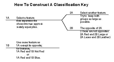 How to Construct a Classification Key