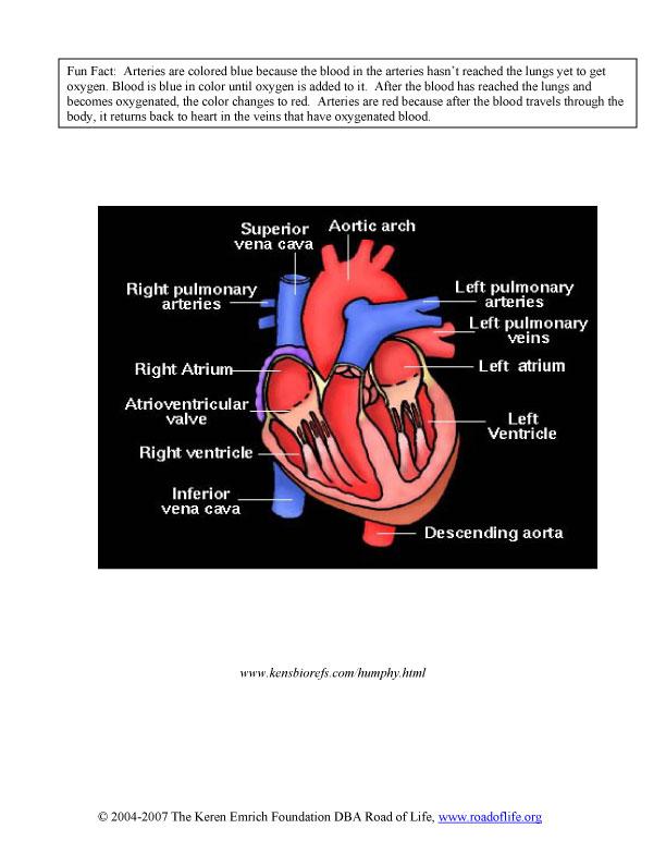 diagram-worksheet-4.jpg